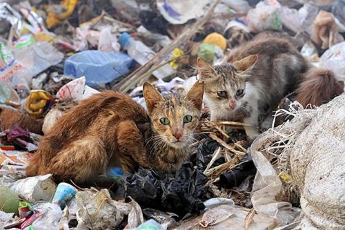 garbagecats
